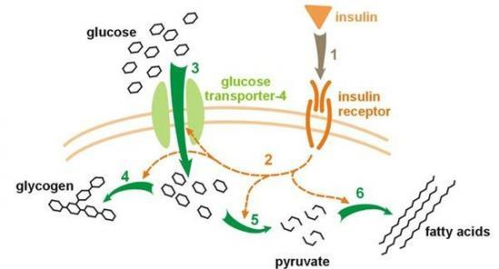 Insulinsens1-550x297
