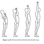 Schulterdrücken – Richtige Technik und Übungsausführung